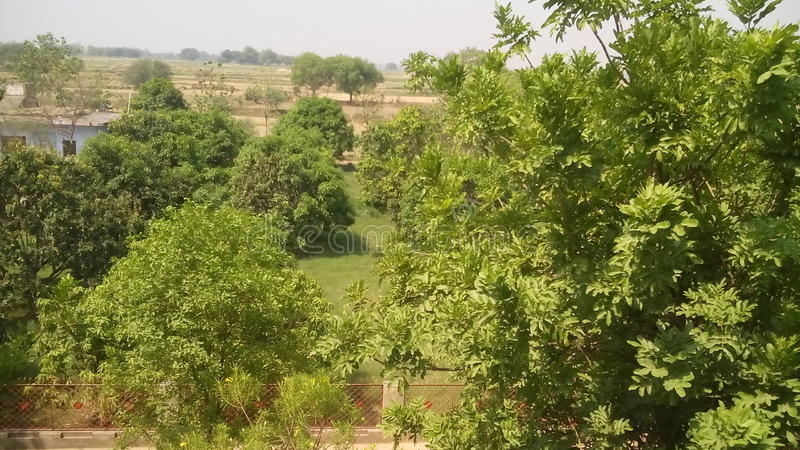 Lovlt-Baum, der im Wald sammelt stockbilder