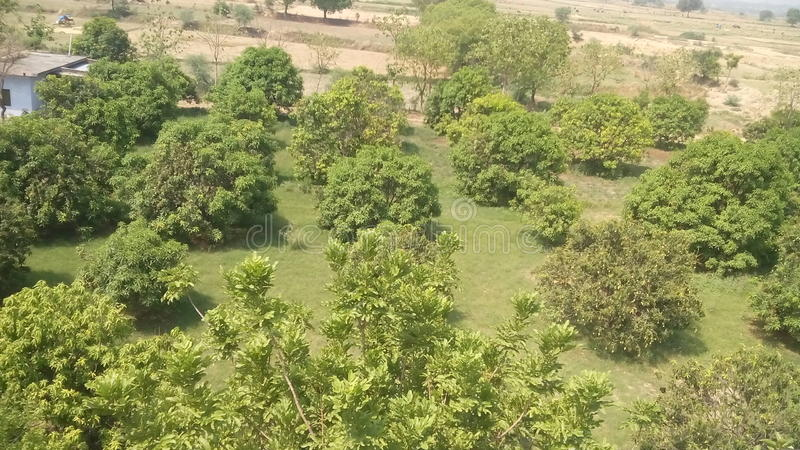 Lovly-Baum des Waldes in Indien stockbild