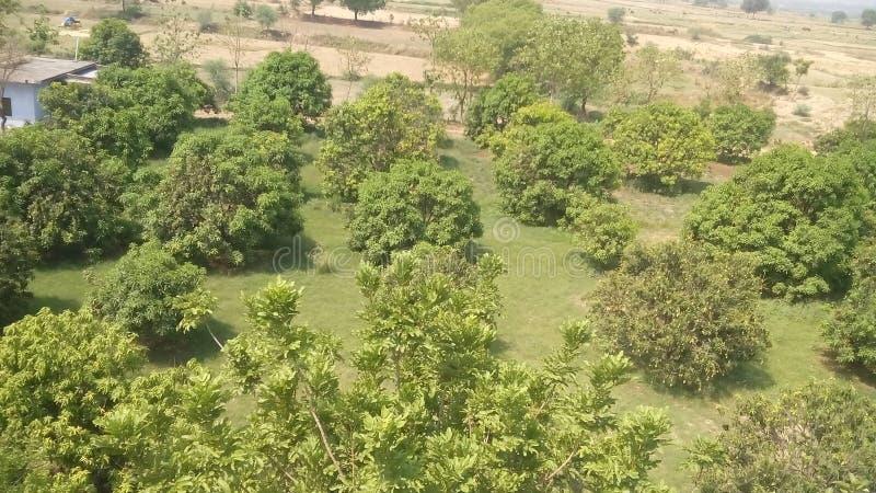 Lovly bosboom in India stock afbeelding