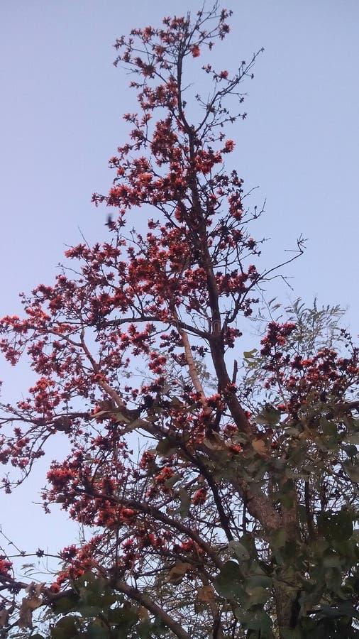 Lovlyboom in het bos royalty-vrije stock afbeeldingen
