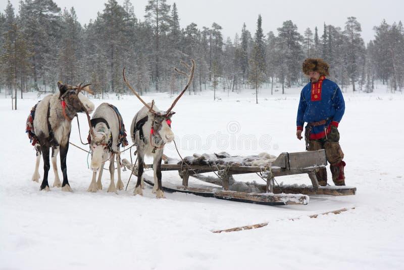 Lovozero, Россия - 8-ое января 2014, костюм Sami национальный около северного оленя стоковая фотография rf