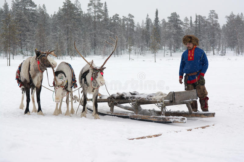 Lovozero, Russia - January 08, 2014, Sami national costume near the reindeer.  royalty free stock photography
