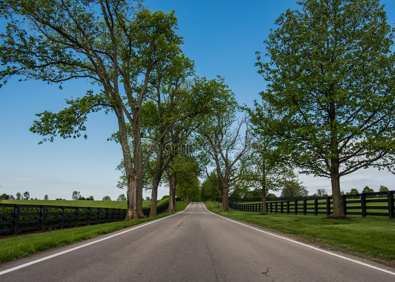 Low Angle of Country Road Lined with Black Fences. In summer stock photo