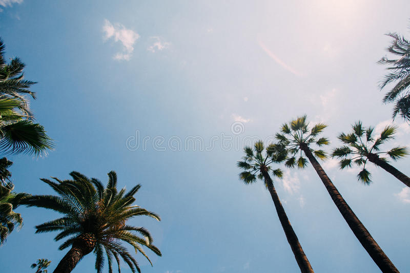 Low Angle Of Palm Tree Under White And Blue Sky During Daytime Free Public Domain Cc0 Image