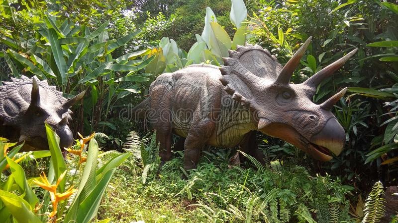 Low Angle Perspective, Photo Robot of Triceratops, Herbivora dinosaur, from north america and canada at artificial forest. Photo Robot of Triceratops, Herbivora stock image