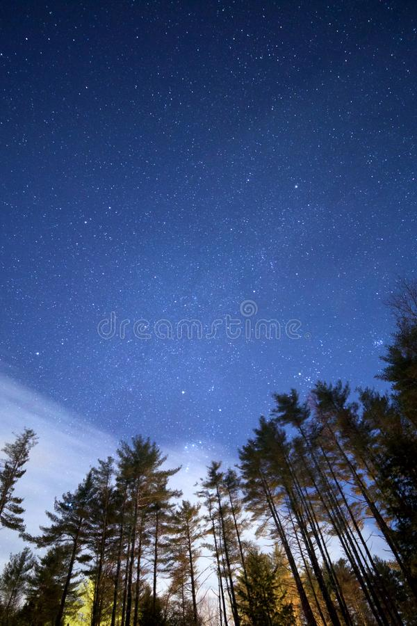 Low Angle Photo of Green Leaf Tall Trees Under Night Time stock photo