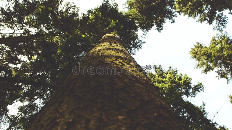 Low Angle Photo of Green Leaf Tree Under White Clouds during Daytime stock image