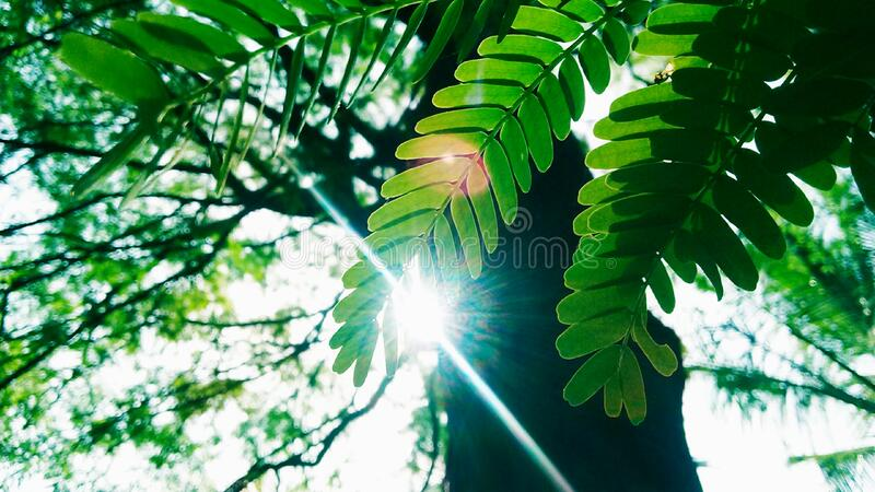 Low Angle Photography of Green Leaves Plant With Tall Forest Tree stock image
