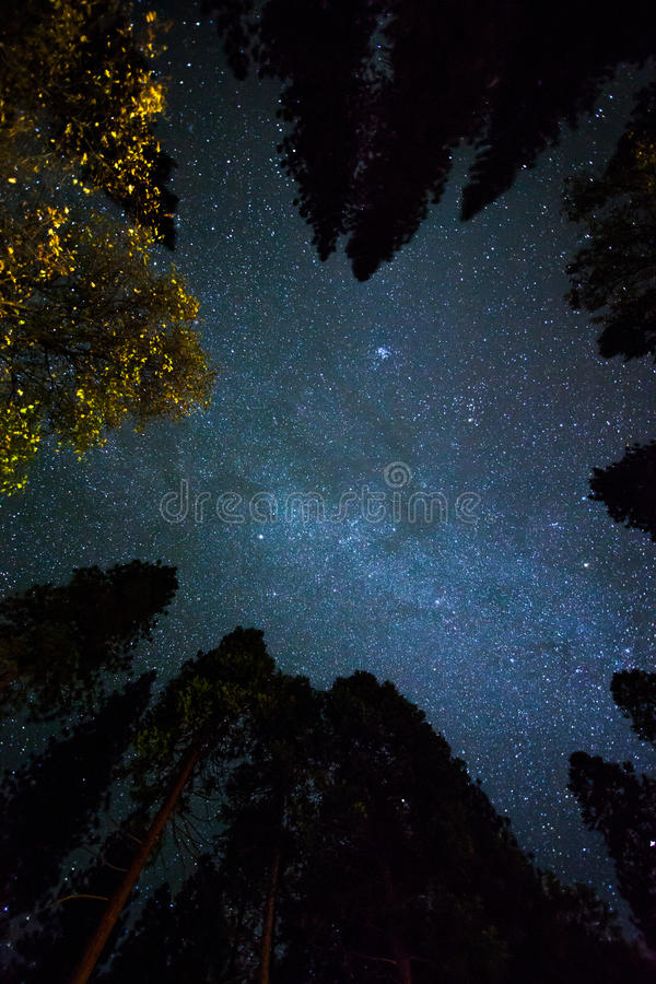 Low Angle Photography Of Green Pine Trees Under Starry Sky During Night Time Free Public Domain Cc0 Image