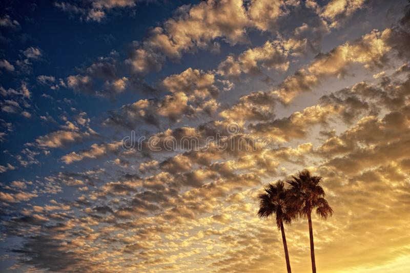Low Angle Photography of Palm Tree Under Cloudy Sky during Golden Hour stock images