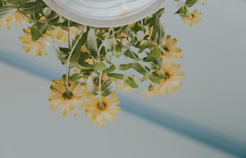 Low Angle Photography of Petaled Flowers on White Ceramic Pot royalty free stock photos