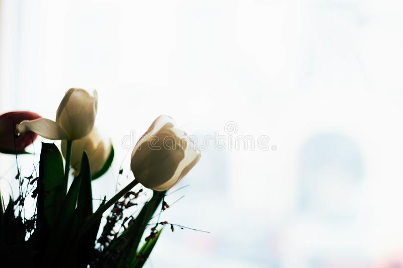 Low Angle Photography White Tulip Flowers stock photos