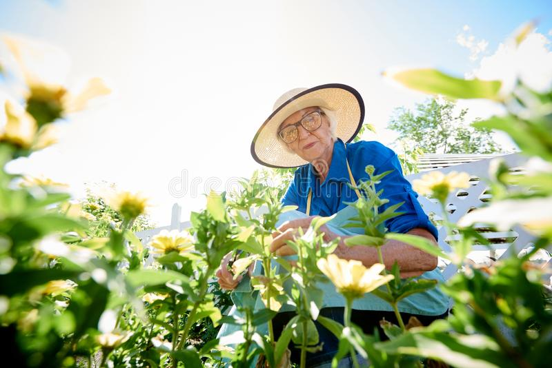 Senior Woman Planting Flowers stock image