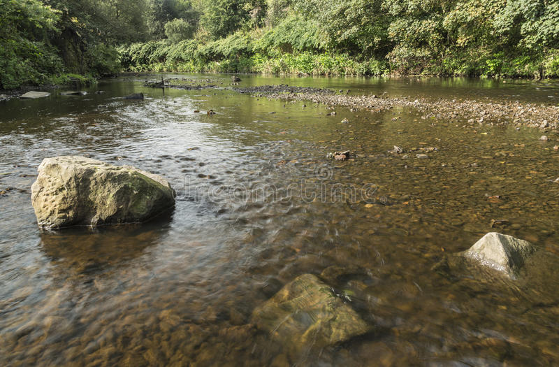 Low angle river view at Moses Gate Country Park, near Bolton. Lancashire, England, UK with clear waters running over stones in river and bushes lining the royalty free stock image