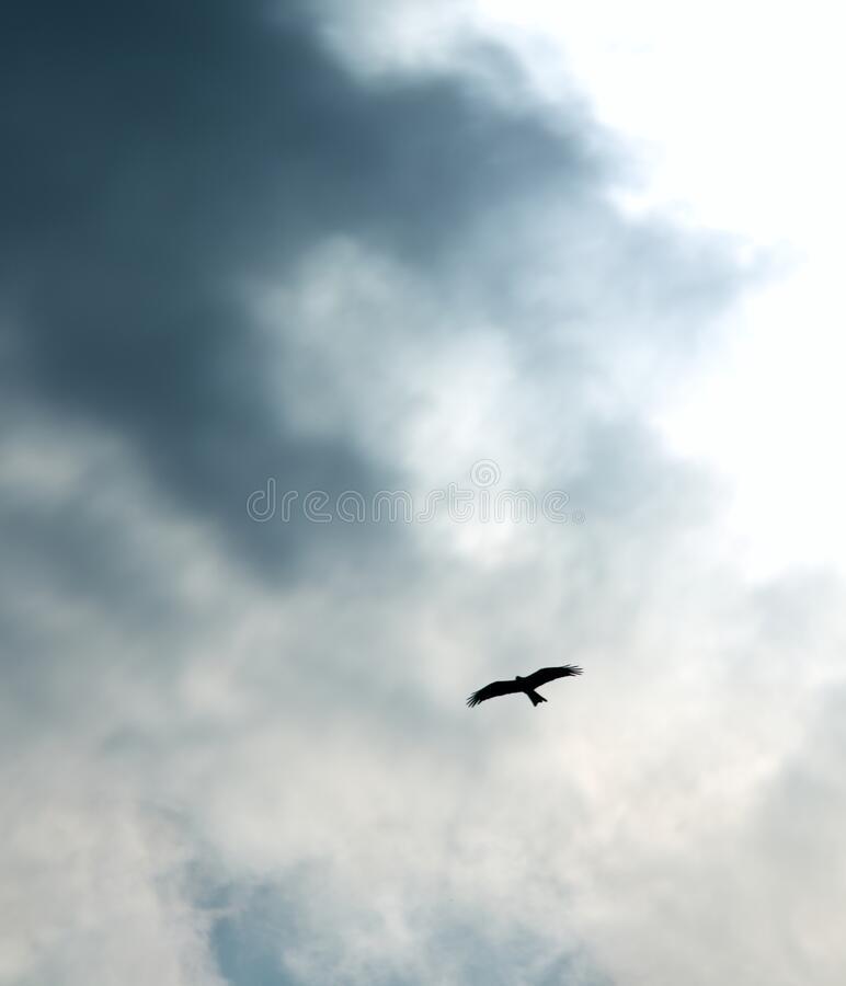 Low angle shot of a bird flying in a gray cloudy sky. A low angle shot of a bird flying in a gray cloudy sky royalty free stock images