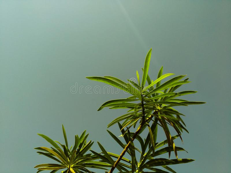 Low Angle Shot of Green Leaf Plant Under Gray Sky stock photography