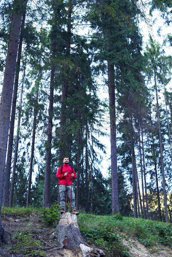 Thoughtful man standing on stump, holding hiking poles royalty free stock photos