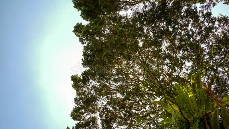 Low angle tree with blue sky background.  royalty free stock images