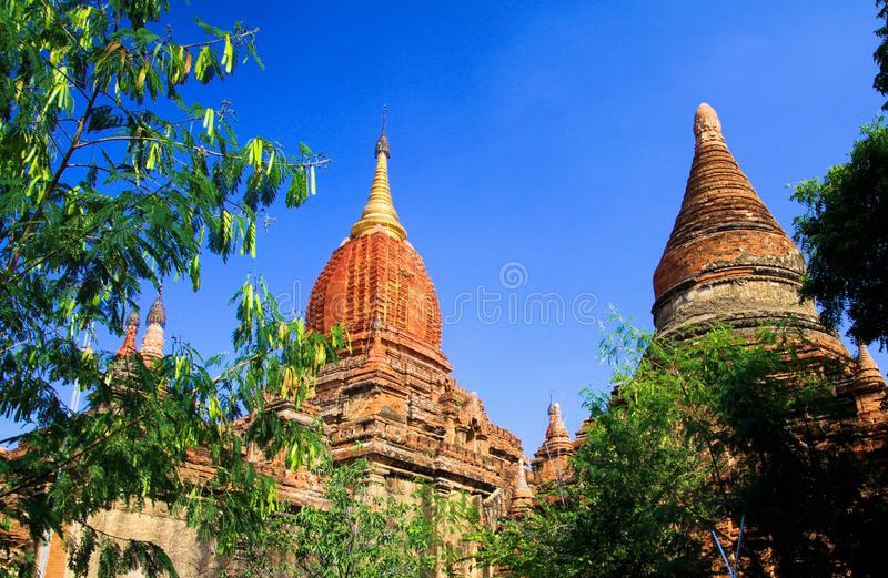 Low angle view beyond trees on  isolated red domes of ancient buddhist brick stone temples against blue sky -  Bagan, Myanmar. Low angle view beyond trees on red stock images