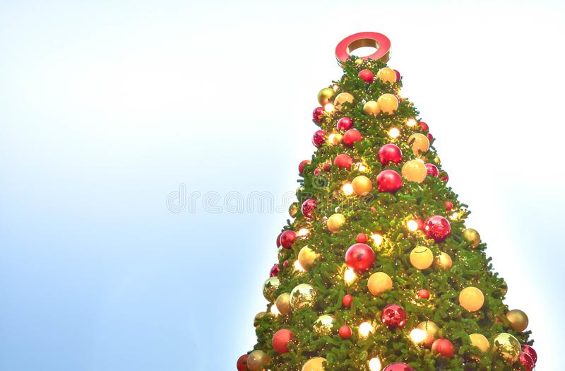 Low angle view of big Christmas trees and cloud sky in the background. Christmas festival outdoor royalty free stock image