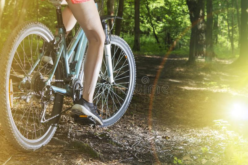 Low angle view of cyclist riding mountain bike on forest trail at sunset royalty free stock photo