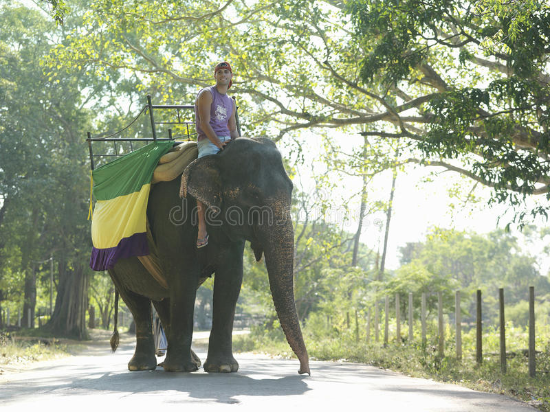 Low Angle View Of Man Riding On Elephant stock image