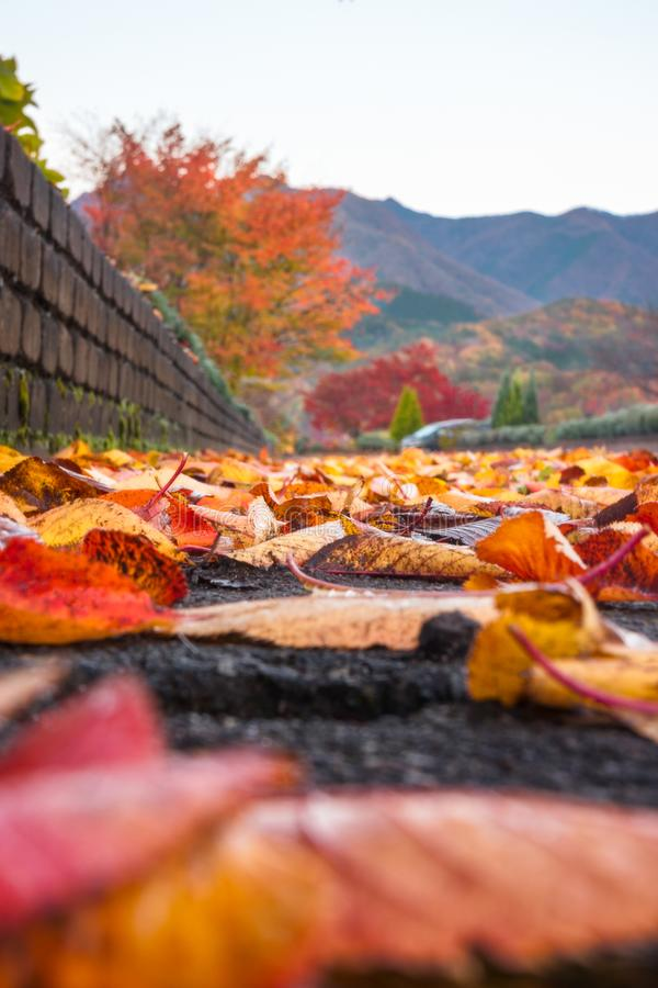 Low angle view on a park path, with fallen autumn leaves stock photo