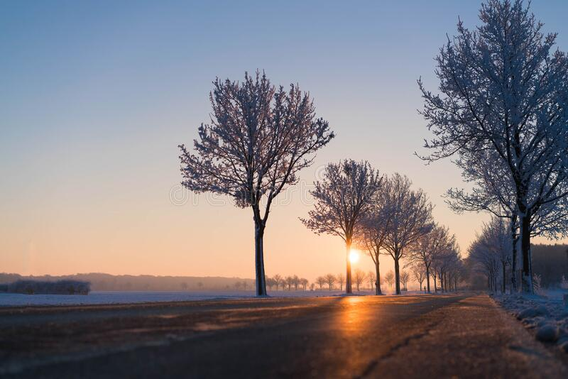 Low Angle View Photo Of Concrete Road Between Trees Beside Body Of Water During Sunrise Free Public Domain Cc0 Image