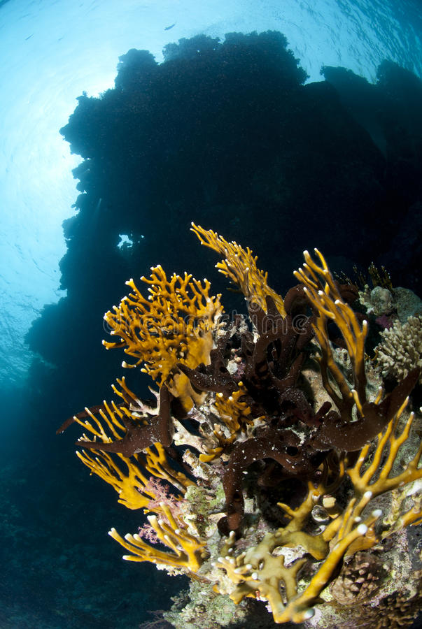 Download Low Angle View Of A Pristine Tropical Coral Reef. Royalty Free Stock Photography - Image: 16466747