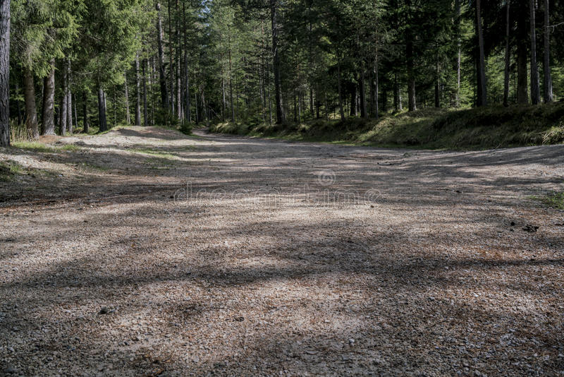 Low angle view of a road through a forest royalty free stock images