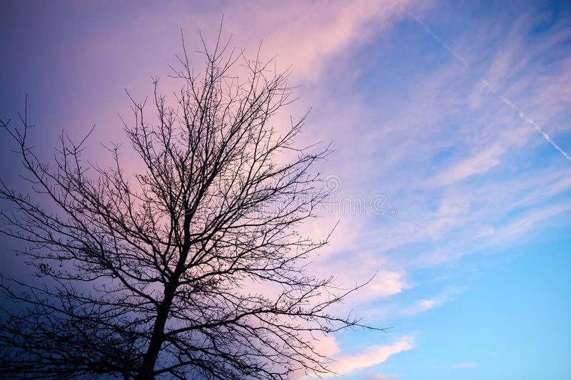 Bare tree against cloudy romantic sky at sunset stock photo