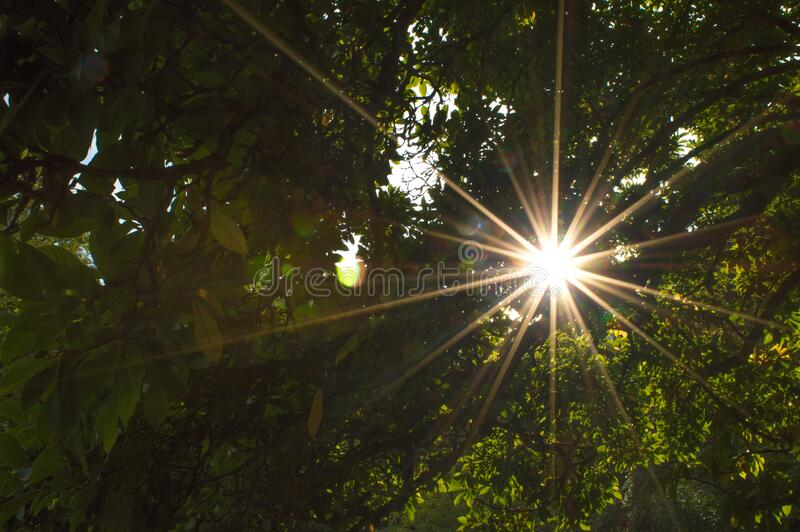 Low Angle View Of Sun Shining Through Trees Free Public Domain Cc0 Image