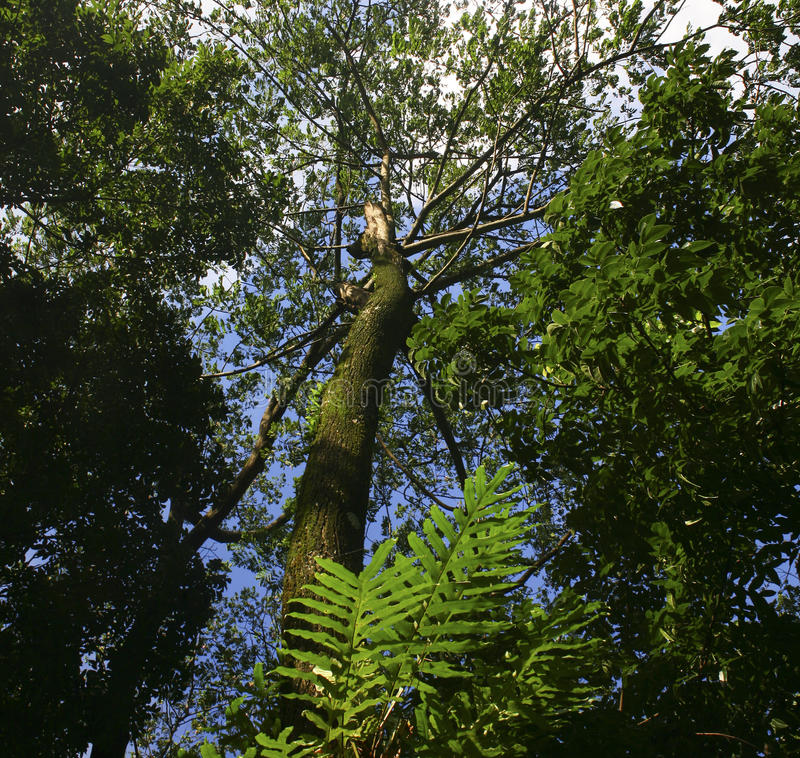 Low angle view of trees stock photos