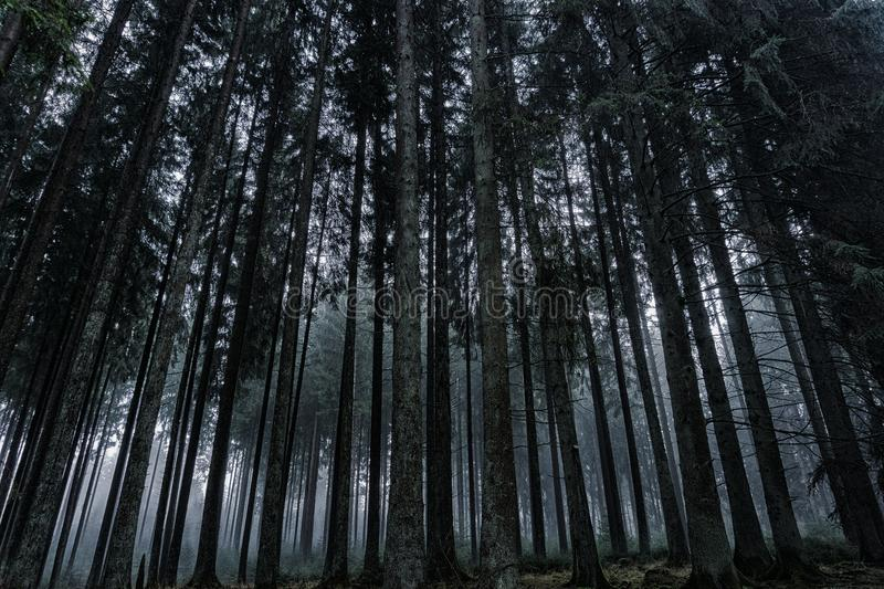 Low Angle View of Trees in Forest Against Sky royalty free stock photo