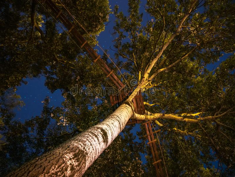 Low angle view of the trees with a walkway. On it on a late night with stars on the sky royalty free stock images