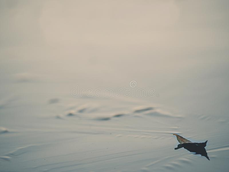 Low ankle view to leaf on ice. Frozen pond  level royalty free stock photography