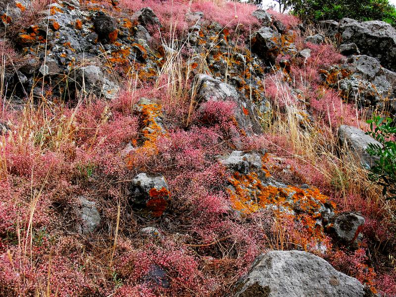 Low growing plants and reddish lichens on a rock stock images