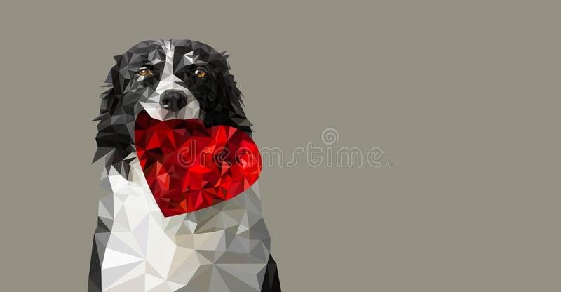 Low Poly Vector Illustration: Dog Holding Red Heart. Black and White Border Collie on Romantic Valentines Greeting Card, Wedding A stock illustration