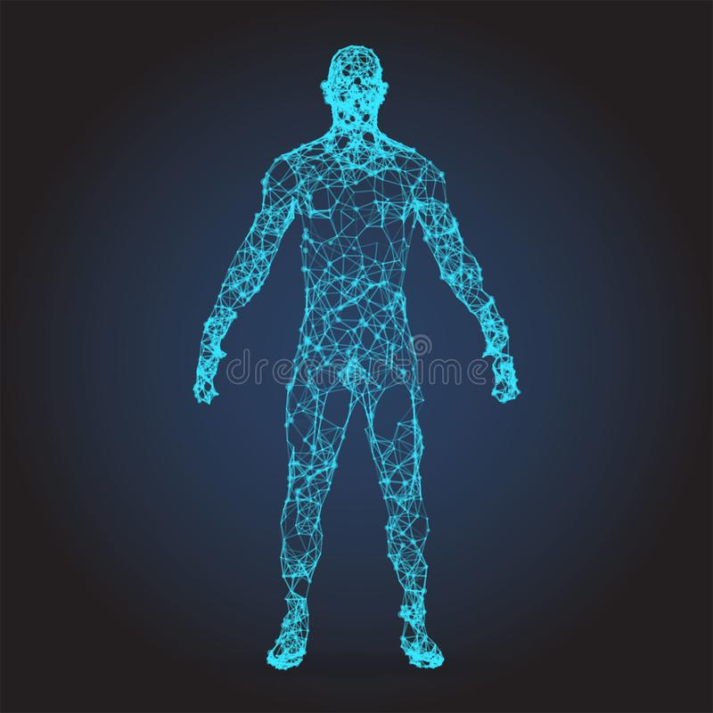 Low poly wireframe Human Body. Abstract Illustration royalty free stock photos