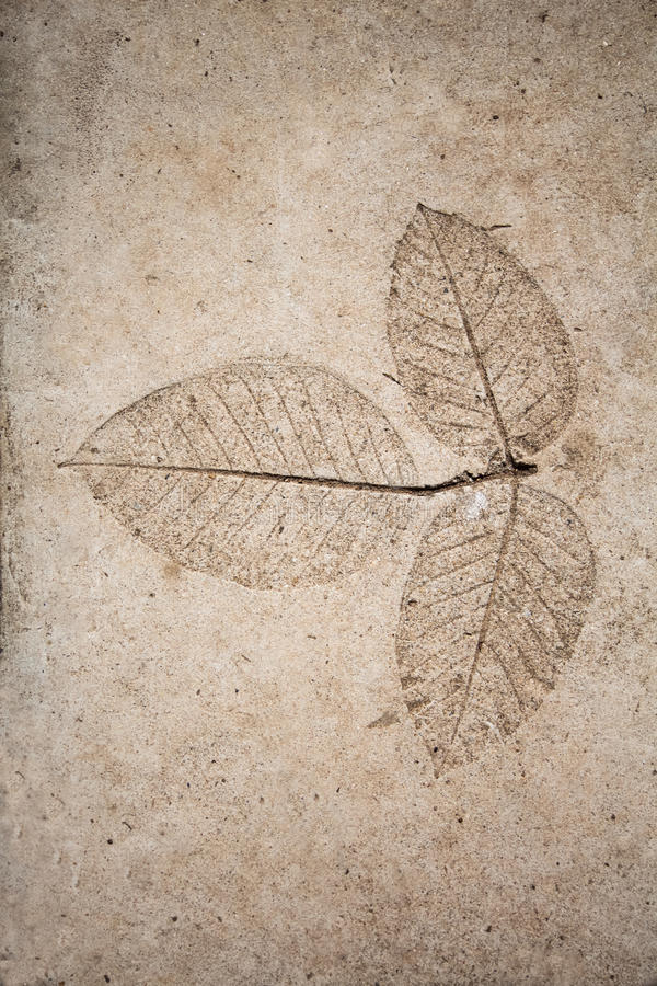 Low relief leaf on cement.  royalty free stock images