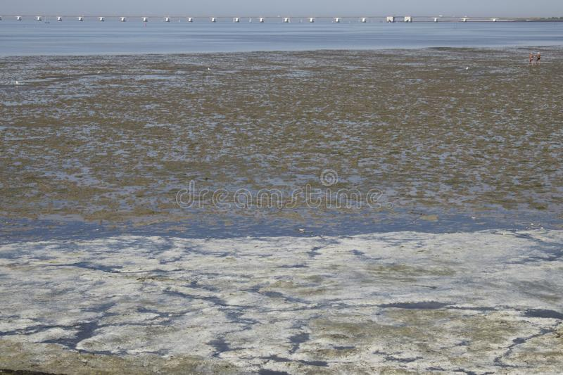 Low tidal bottom royalty free stock images