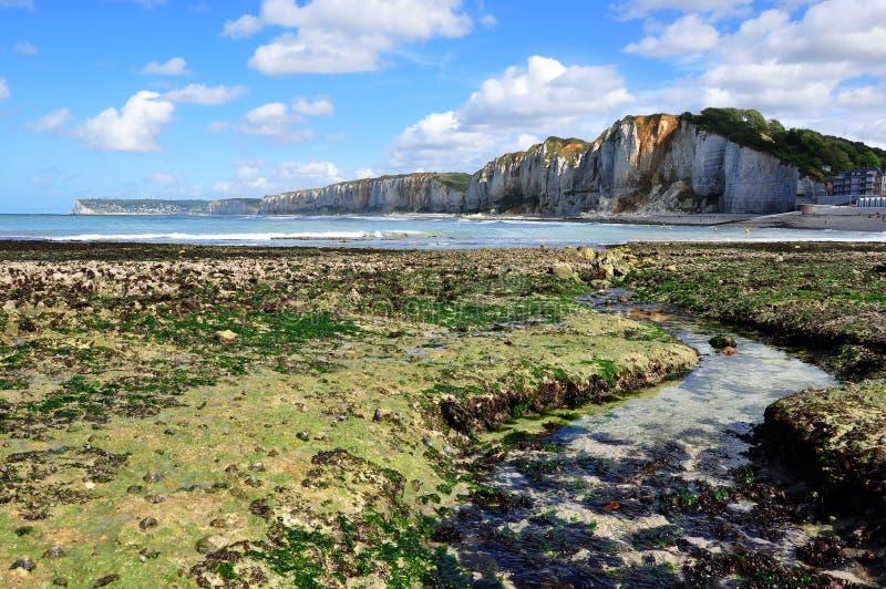 Download Low tide stock photo. Image of cliffs, tide, mollusc - 19395886