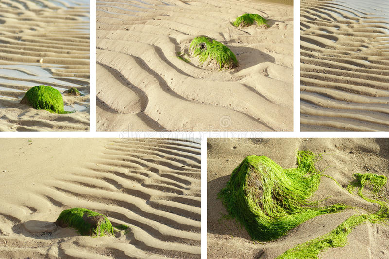 Download Low Tide collage stock photo. Image of beach, rocks, oceanic - 25766860