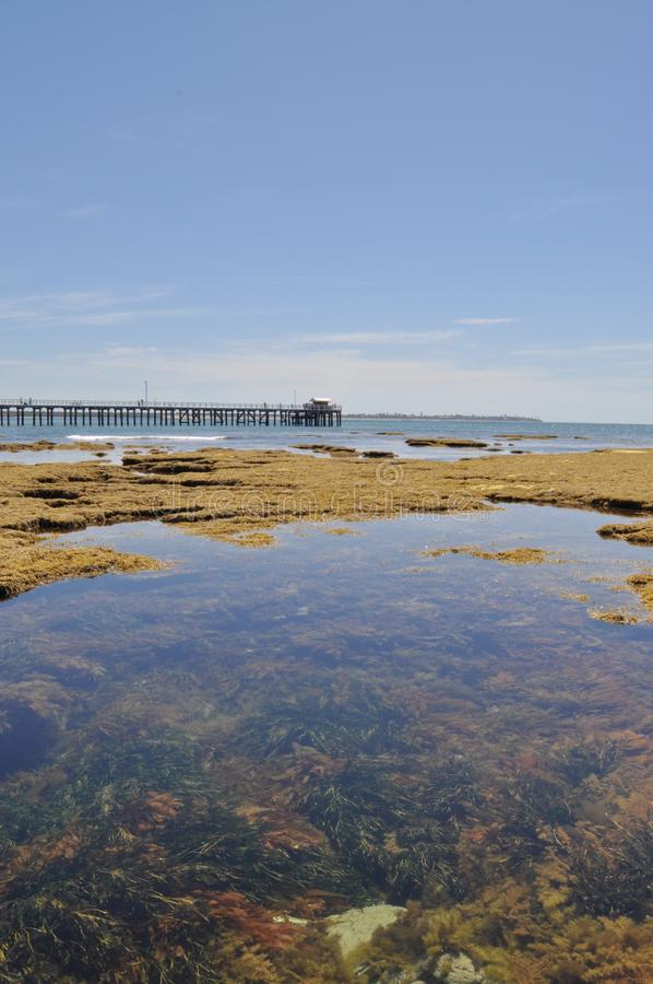 Low tide Point Lonsdale Pier, Port Philip Heads, Victoria, Australia. With the underwater gardens in view stock photos