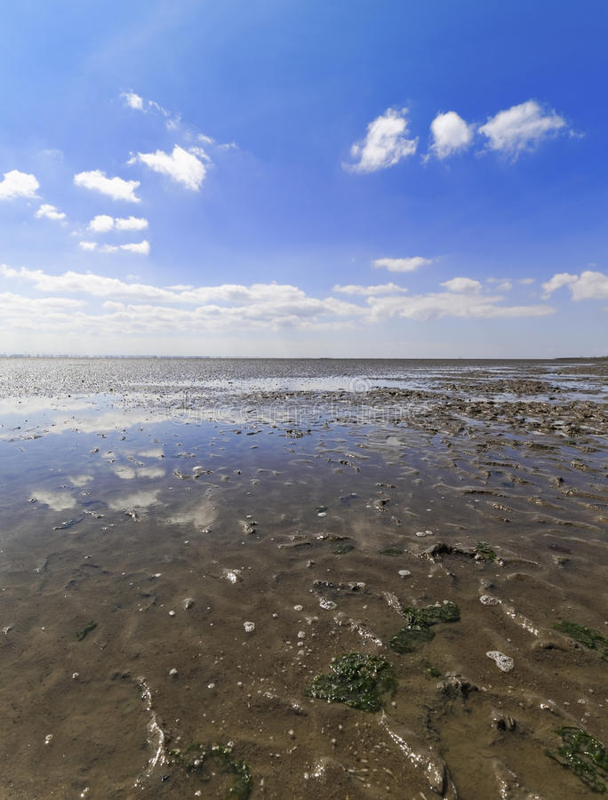 Download Low Tide In Watts On The North Sea Stock Photo - Image: 83707176