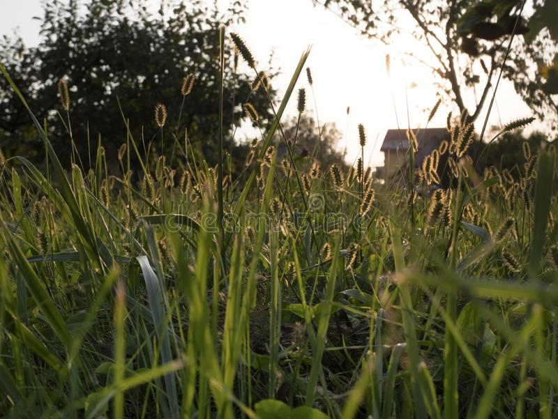 Low view of the Meadow. In the summer. Sunset, and golden shadows of plants stock photo