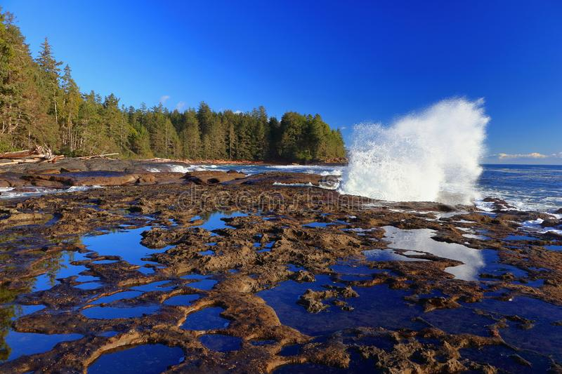 Low Winter Sun Shining on Dramatic Crashing Wave and Still Tidal Pools at Botanical Beach, Juan de Fuca Provincial Park, Vancouver. Powerful Pacific wave stock photo