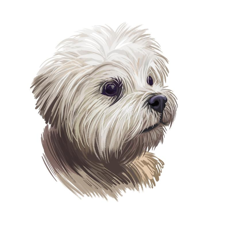 Lowchen little lion dog, petit chien toy breed digital art illustration. French canine, pet originated in France with long and. Wavy coat. Portrait closeup of royalty free illustration