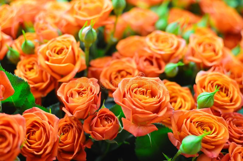 Beautiful bouquet of orange flowers roses stock image