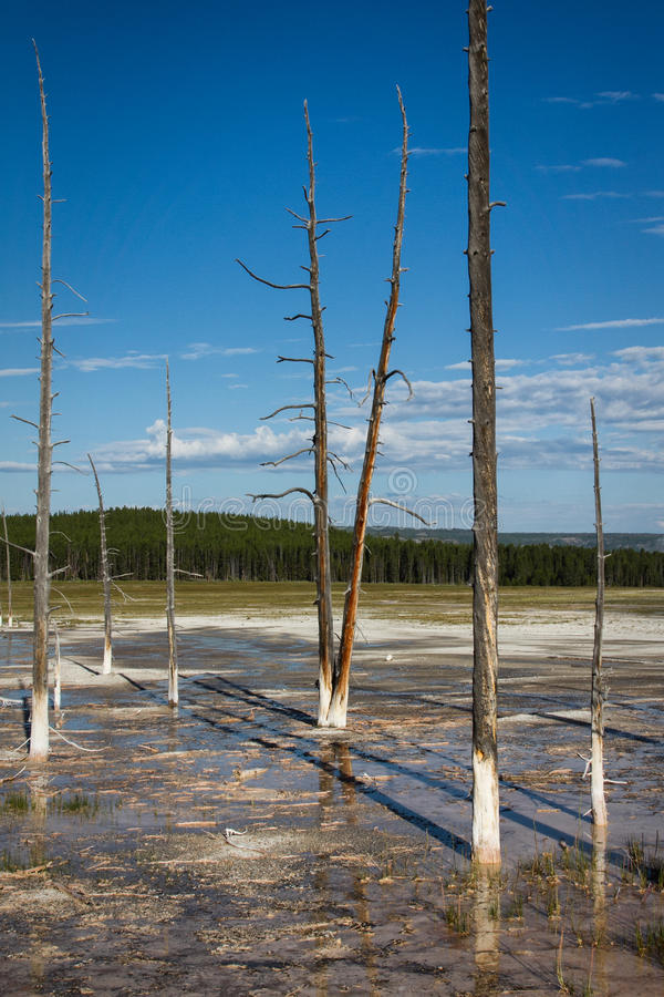 Lower Geyser basin. View in the Lower Geyser basin, Yellowstone National Park stock photo